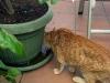 Katten ratar kranvatten, det bästa är att dricka från krukfaten...
