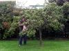 Så kom Ewas man Kjell-Arne, jag fick honom att plocka lite plommon.