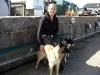 Vi tar en promenad i Mölles hamn med Katarinas fina hundar.