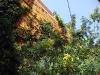 Så härligt när man ser en blå himmel när man tittar upp i den lilla trädgården...
