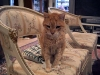 Min ständige följeslagare Frasse är alltid nära, här undrar han vad jag gör i soffan...