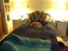 Frasse har äntligen funnit sig till ro, i min säng....