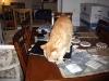 Fredag eftermiddag, Frasse tycker det är spännande på matsalsbordet.