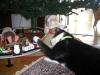 Katten Maja är mycket imponerad av leksakståget som går runt julgranen.