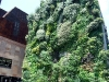 Caixa Forums blommande vägg för Karin, den påminner ju en hel del om husväggen hemma.
