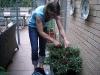 Karin är flitig och klipper och ansar mina krukväxter.