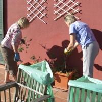 Borttagning av halvdöda krukväxter ute