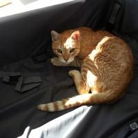 Frasse protesterar mot att lägga sig i resväskan där jag skall packa ner kläder.