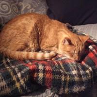 Efter mycket sniffande och mycket om och men har äntligen Frasse kommit till ro på en gammal, välkänd filt i den nya lägenheten.